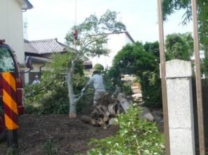 伐採伐根、鈴木建商